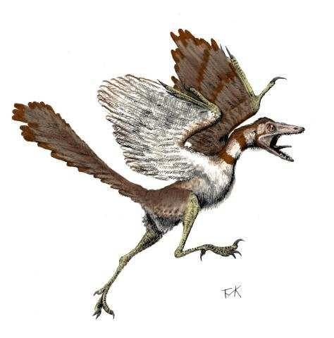 Image hotlink - 'http://www.people.eku.edu/ritchisong/archaeopteryx-tmk.jpg'